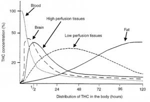 Gráfico 1. Relación entre la distribución en el tiempo de THC en el cuerpo y su concentración en porcentaje. Tomado de Nahas, 19758.